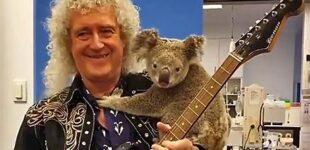 Новости шоубиз. Гитарист легендарной группы Queen Брайан Мэй сыграл для спасённой во время пожаров коалы