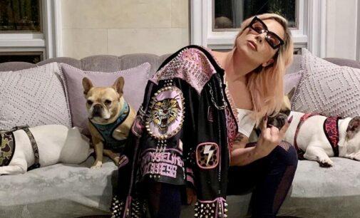 Новости шоубизнеса. Неизвестные выстрелили в выгульщика собак Lady Gaga и украли двух ее псов