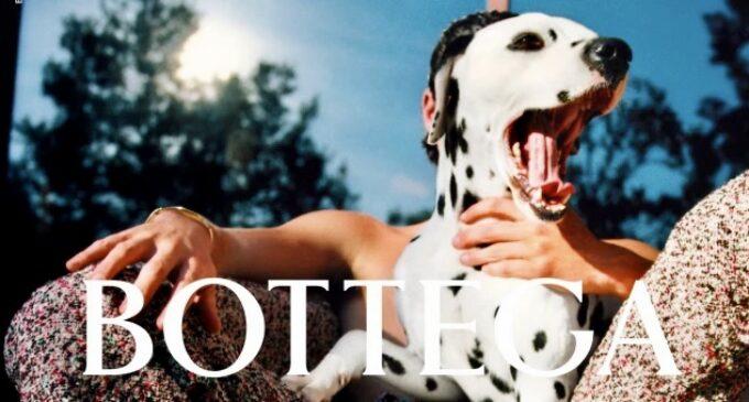 Модная индустрия. В новой кампании Bottega Veneta снялись далматинец и попугай